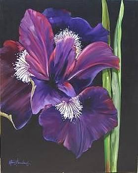 Iris by Stan  Sternbach