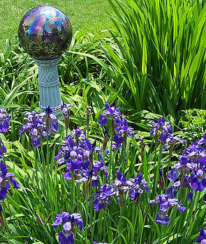 Iris Time by Sandy Collier