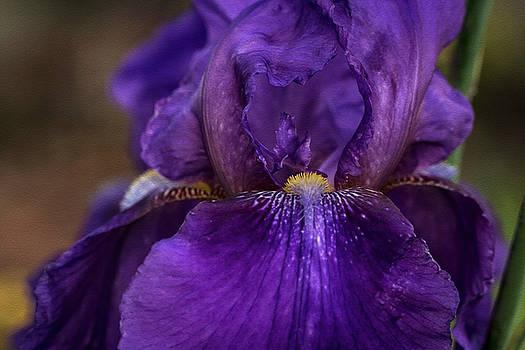 Iris time by Vanessa Thomas