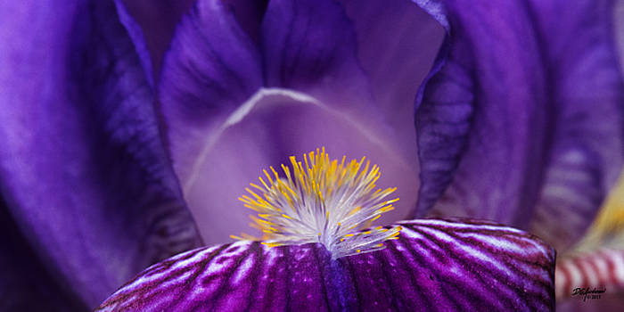 Iris upclose by Don Anderson