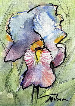 Iris with IMPACT by Ron Wilson