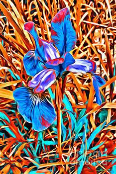 Iris Wow by Barbara Milton