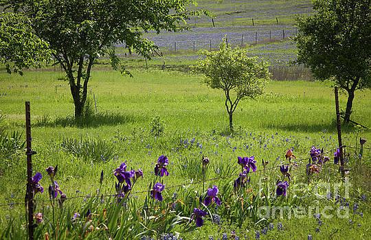 Irises ' Place by Iris Greenwell