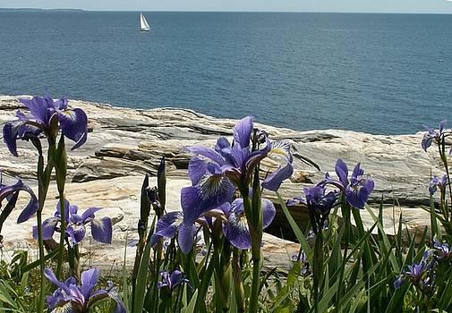 Irises at Pemaquid by Theresa Willingham