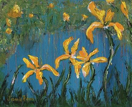 Irises by Jamie Frier