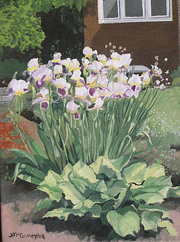 Irises by Joan McGivney