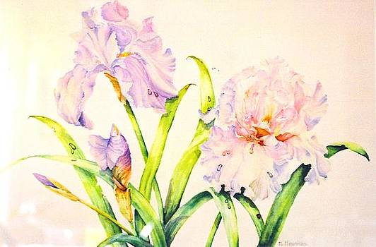 Irises by Nancy Newman
