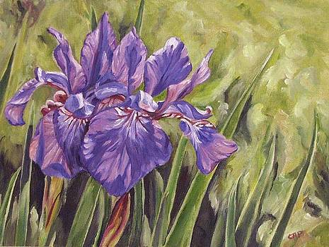 Irises Times Two by Cheryl Pass