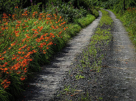 Irish Country Road Lined with Wildflowers by James Truett