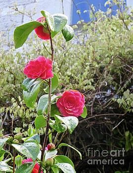 Irish Flora and Fauna 3 by Crystal Rosene