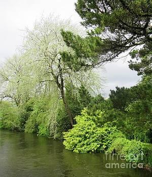Irish River 3 by Crystal Rosene