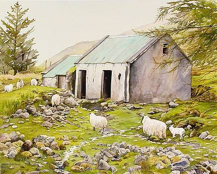 Irish Sheep Farm by Brenda Beck Fisher