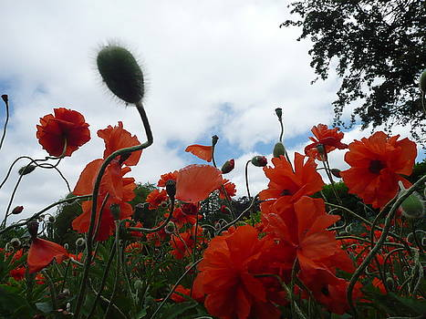 Irish Spring Blossoms by Aleksandra Buha