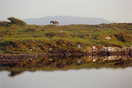 Irish Stallion - Horse in Western Ireland by Bob See