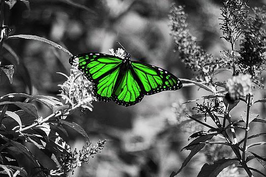 Irish Wings by Lori Tambakis
