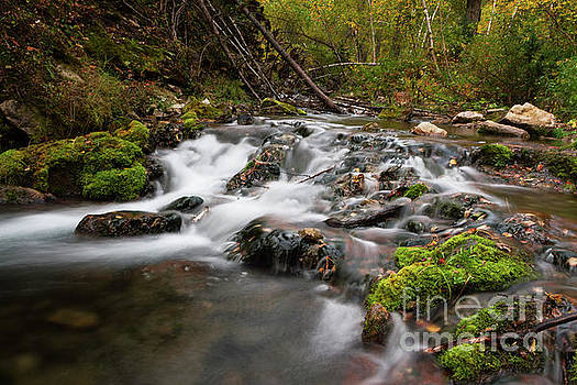 Iron Creek Rapids  by Steve Triplett