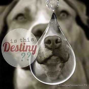 Kathy Tarochione - Is this Destiny