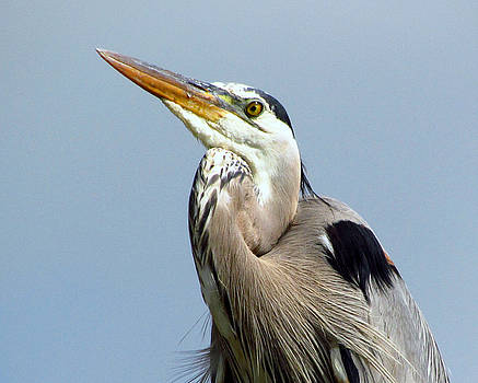 Is This How A GBH Smiles by Lori Pessin Lafargue
