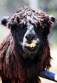 Is your Mama a Llama? by Anthony Jones