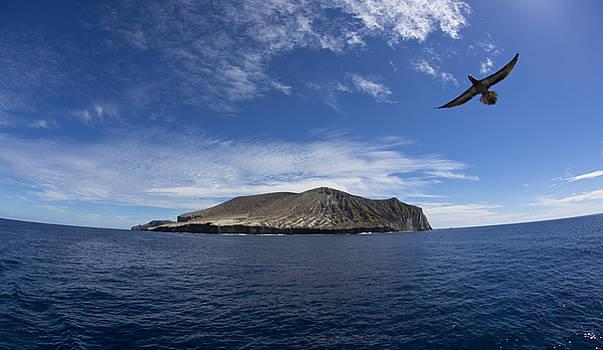 Isla San Benedicto by David Valencia