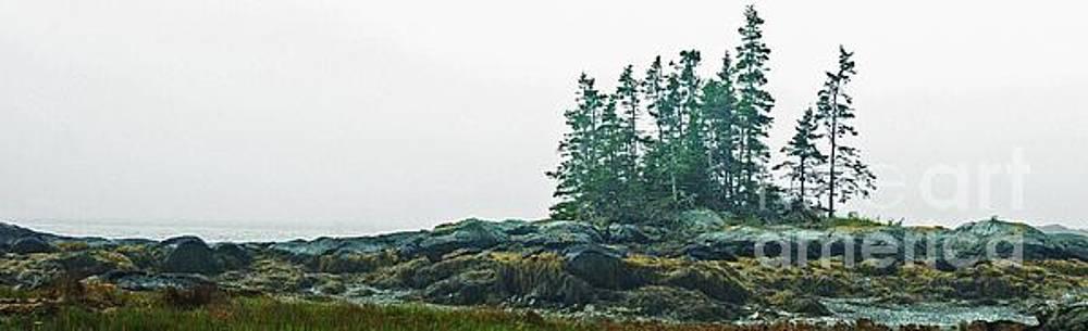 Island, Fog by Christopher Mace