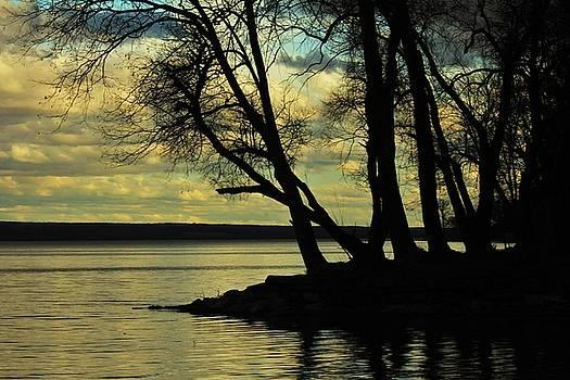 Island by Jaime Malave