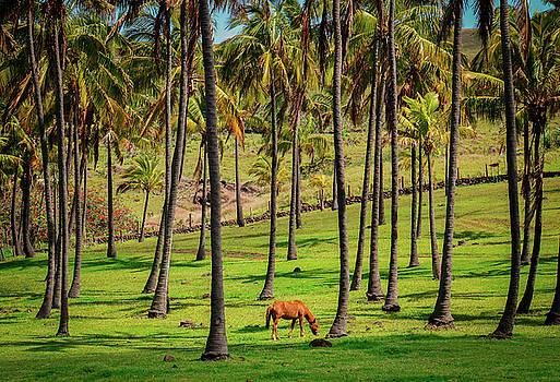 Island Lawnmower by Paki O'Meara