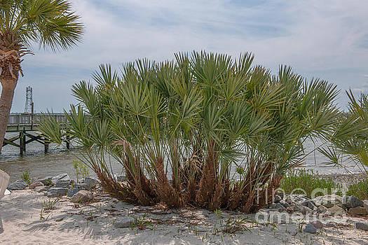 Dale Powell - Island Palms