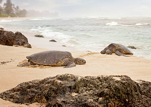 Heather Applegate - Island Rest
