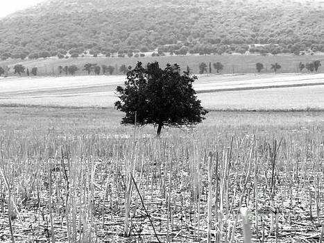 Isolation by Mioara Andritoiu