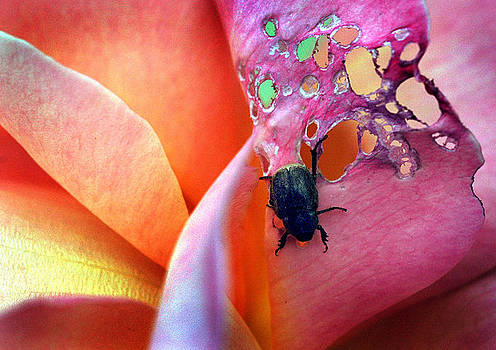 It bugged me by Norman  Andrus