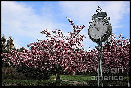 It is Cherry Blossom Time by Dora Sofia Caputo Photographic Art and Design