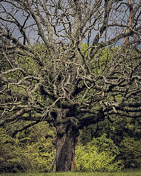 It Was A Beautiful Tree by Philip A Swiderski Jr