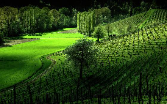 Italian landscape 2 by Livio Ferrari
