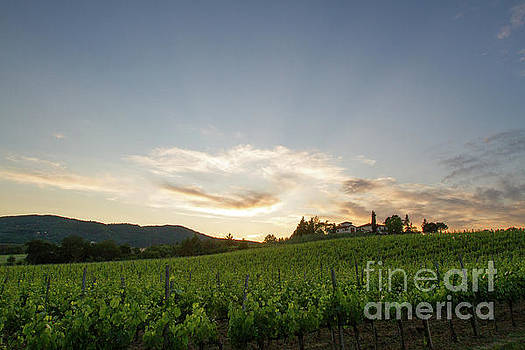 Italian Vineyards by Denise Lilly