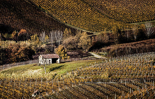 Italian vineyards by Livio Ferrari