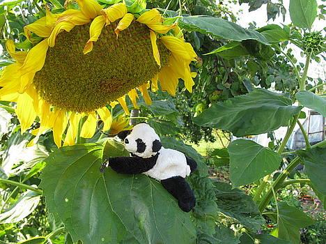 It's a BIG sunflower by Ausra Huntington nee Paulauskaite