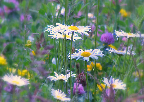 It's A Daisy Kind Of Day by Lori Pessin Lafargue