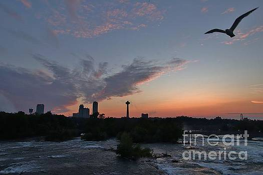 It's a Seagull Sunset by Tony Lee