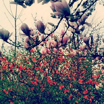 It's That Time Of Year! #spring by Melanie Conway