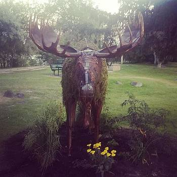 It's The #chia Moose! #snakeriver by Sarah Marie