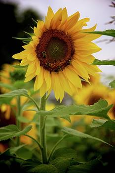 I've Got Sunshine On A Cloudy Day by Morrisa Booker