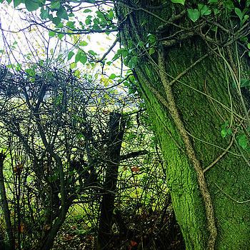 Ivy by Anne Kotan