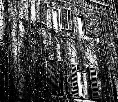 Ivy Building by Paul Jarrett