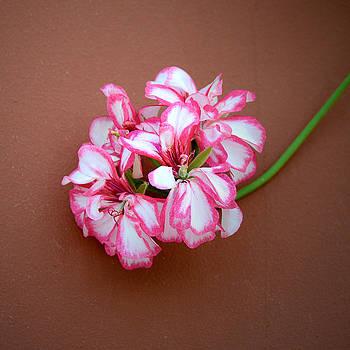 Ivy-leaf Geranium by Marites Reales