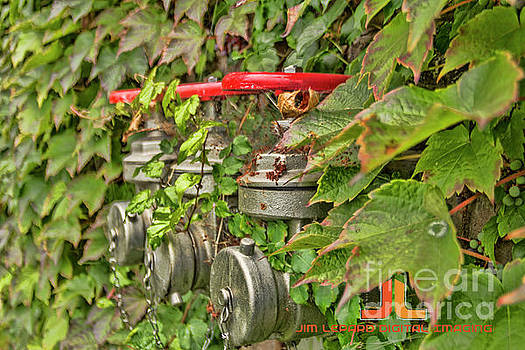 Ivy standpipe by Jim Lepard