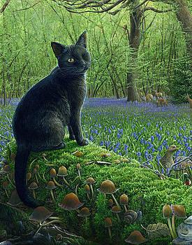 Jack in Paradise by Cara Bevan