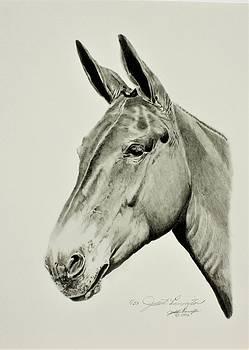 Jack Mule by Judith Pennington