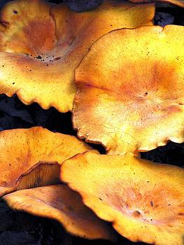 Angela Davies - Jack O Lantern Mushrooms