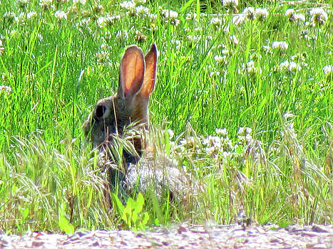 Jack Rabbit - Easter Bunny by Marie Jamieson